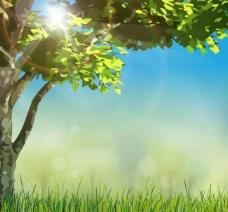 草地 绿树 阳光图片