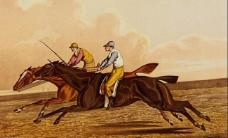 奔驰的骏马图片