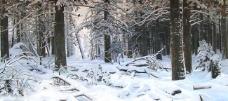 林海雪原图片