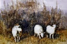 三羊开泰图片
