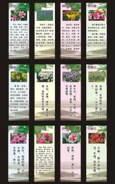 花卉画面图片