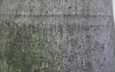 树皮 粗糙 纹理图片