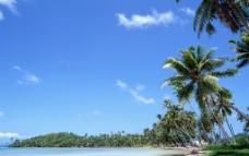 椰树沙滩图片