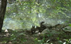 林中松鼠图片