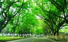公路 树图片