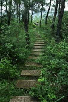 霸王山林间小道图片