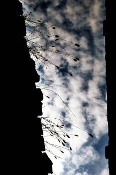 屋顶的谷子图片