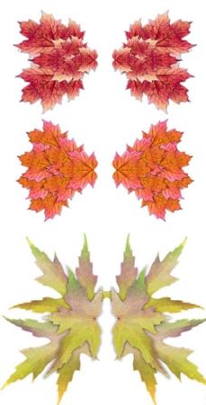 树叶翅膀图片