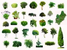 园林园艺装饰树木