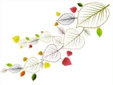 抽象叶子图片