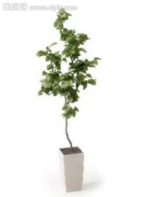 盆栽 優秀盆栽模型圖片