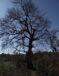 山间树图片