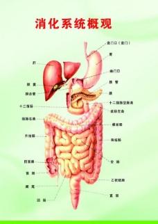 胃肠展板图片