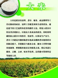 水稻展板图片