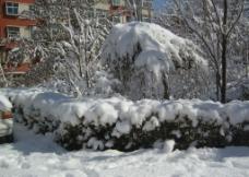 花坛雪景图片