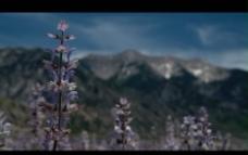 自然花草视频素材