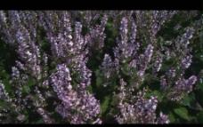 花草视频素材