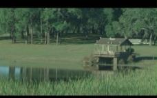 池塘背景视频素材