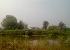 树林河水图片