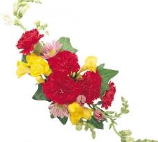 装饰花卉图片