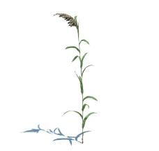 植物模型 小草模型图片