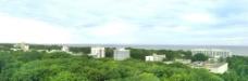树林风景图片