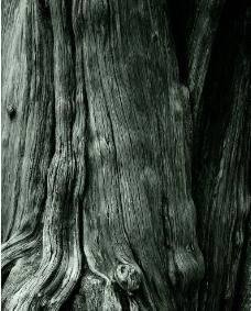 树木原图图片